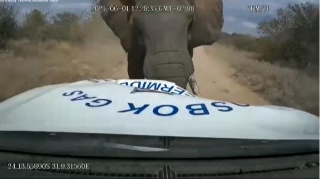 เผยคลิประทึกช้างป่าพุ่งชนรถน้ำมันที่แอฟริกาใต้