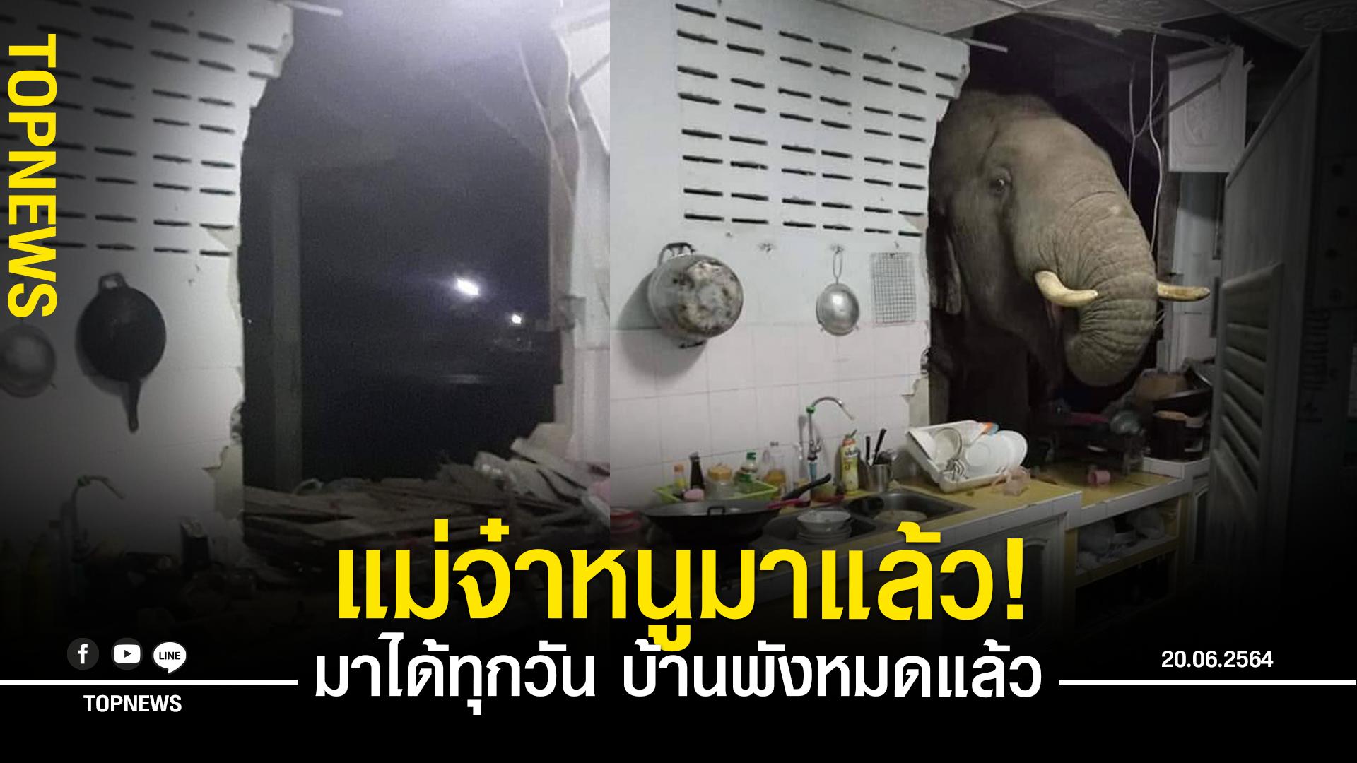 สาวหัวหินสุดเซ็ง! ช้างพังบ้านมาหาอาหาร โผล่จะเอ๋แบบเต็มๆ มุดหัวเข้ามายิ้มหวานถึงในบ้าน วอนจนท.หาทางแก้ไข