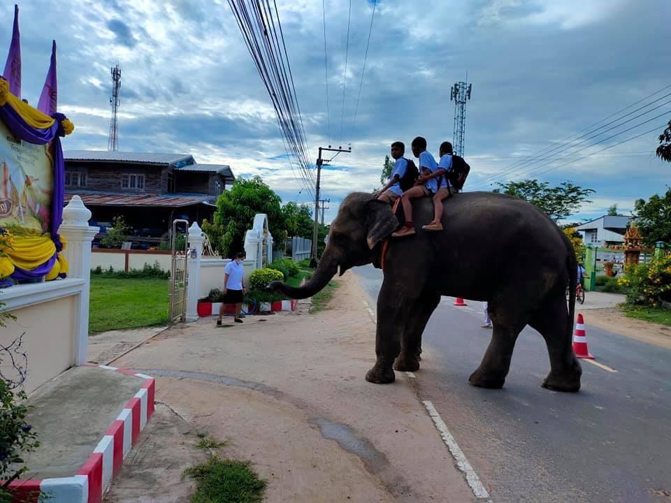 มิติใหม่ของการไปโรงเรียน ตามวิถีคนสุรินทร์ถิ่นช้างใหญ่