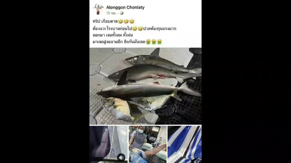 กระบี่ คลิปสะเทือนใจออกเรือตกปลาใช้ปืนยิงฉลามก่อนโพสต์เย้ยกฎหมาย