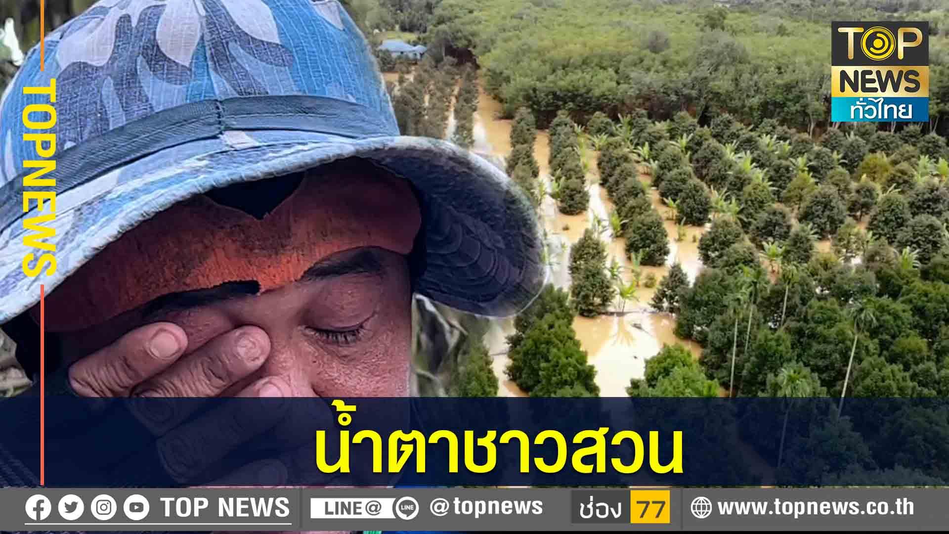 ชาวสวนทุเรียนหลั่งน้ำตา..หลังน้ำลด เจอปัญหาต้นทุเรียนตาย